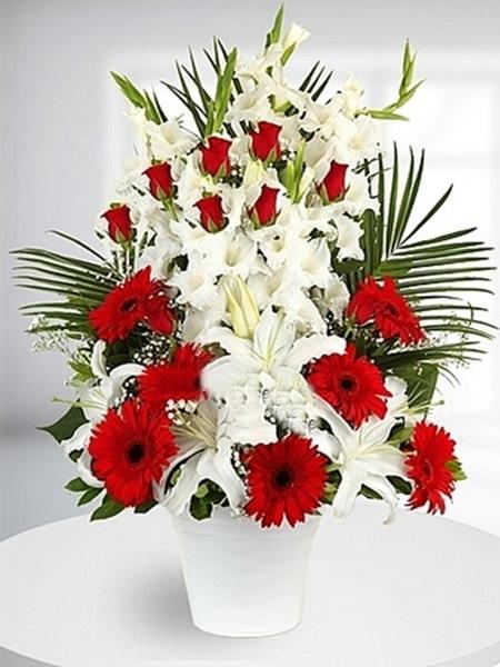 Aranjman Kırmızı Beyaz