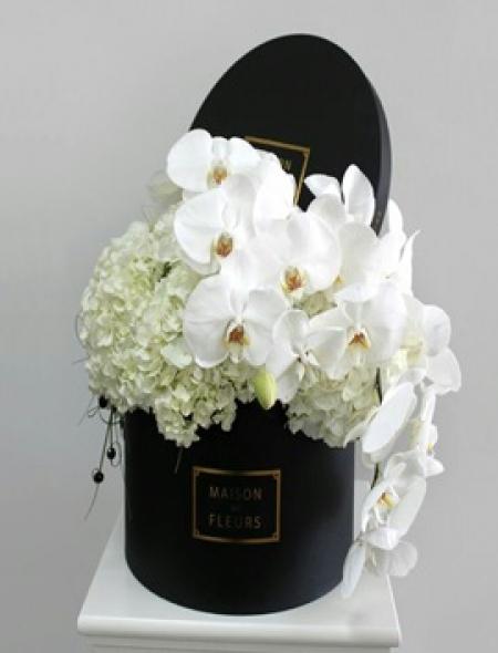 Kutuda Orkide