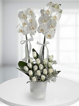 Orkide ve 15 Beyaz Güller