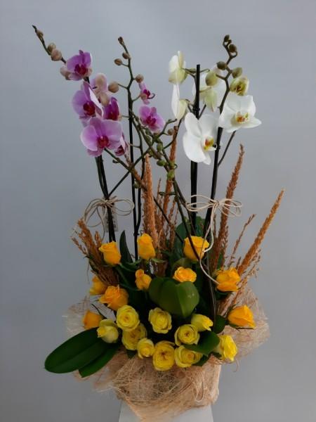 Orkide 4 Dal Sarı Güller İzmir