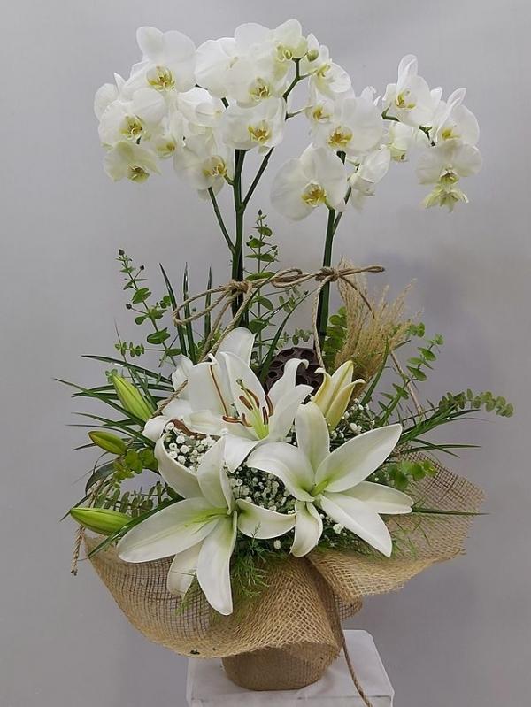 Orkide Lilyum