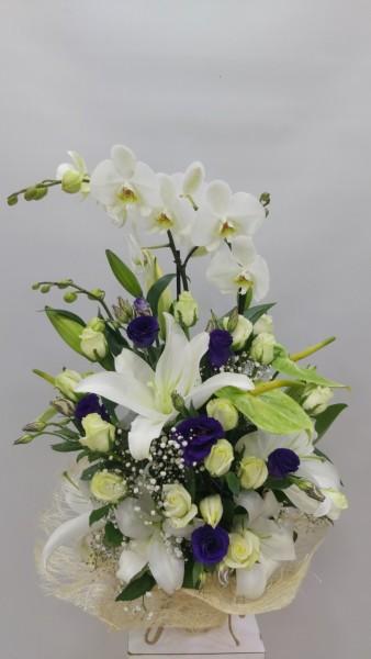 Orkide İzmir Çiçek