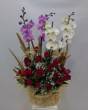4 Dal Orkide Kırmızı Güller