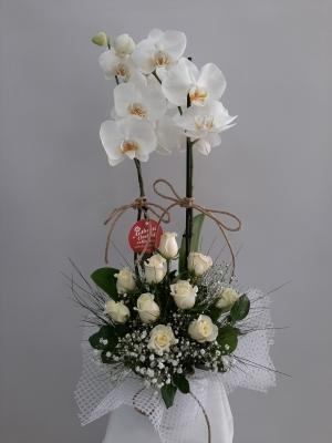 Orkide 10 Beyaz Gül