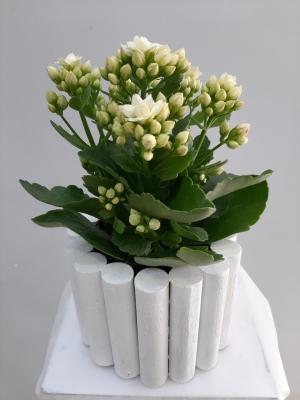 Kalanchoe Çiçeği Ahşap Objede