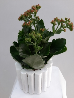 Kalanchoe Saksı Çiçeği Ahşap Objede