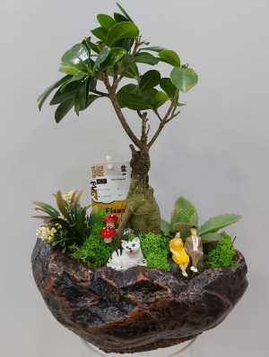 Bonsai Teraryum