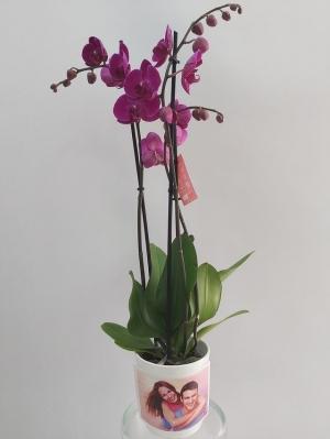 Fotoğraflı Mor Orkide 2 Dal