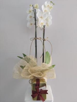 Orkide ve Metal Kutuda Draje Çikolata
